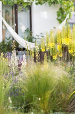 Gartenblog Geniesser Garten Blumen Fuer Insekten Im Naturnahen