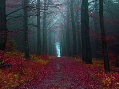 Bosque Negro - Alemania