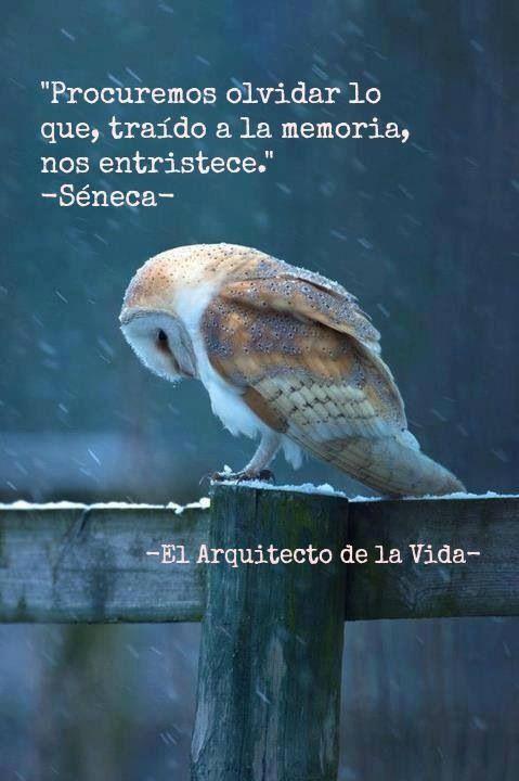 El arquitecto de la vida. -Seneca