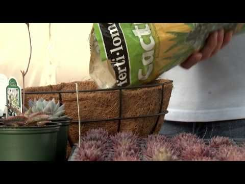 Sedum Spheres, Southern Gardening TV, March 2, 2014 - YouTube