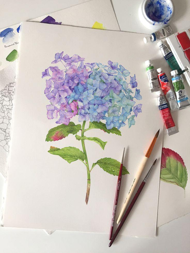 Hydrangea Flower with watercolor on Behance