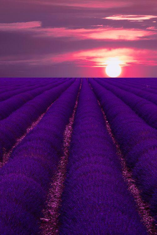 Sunset on Lavender - Provence, France