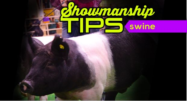 Swine showmanship tips