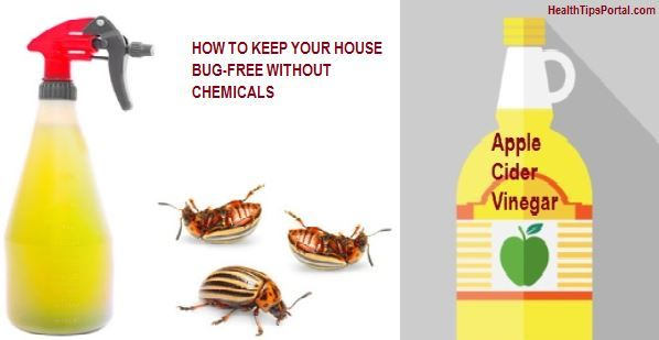 ONE INGREDIENT REMEDIES TO MAKE YOUR HOUSE BUG-FREE (WITHOUT CHEMICALS)