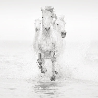 Horses of Camargue - Jonathan Chritchley