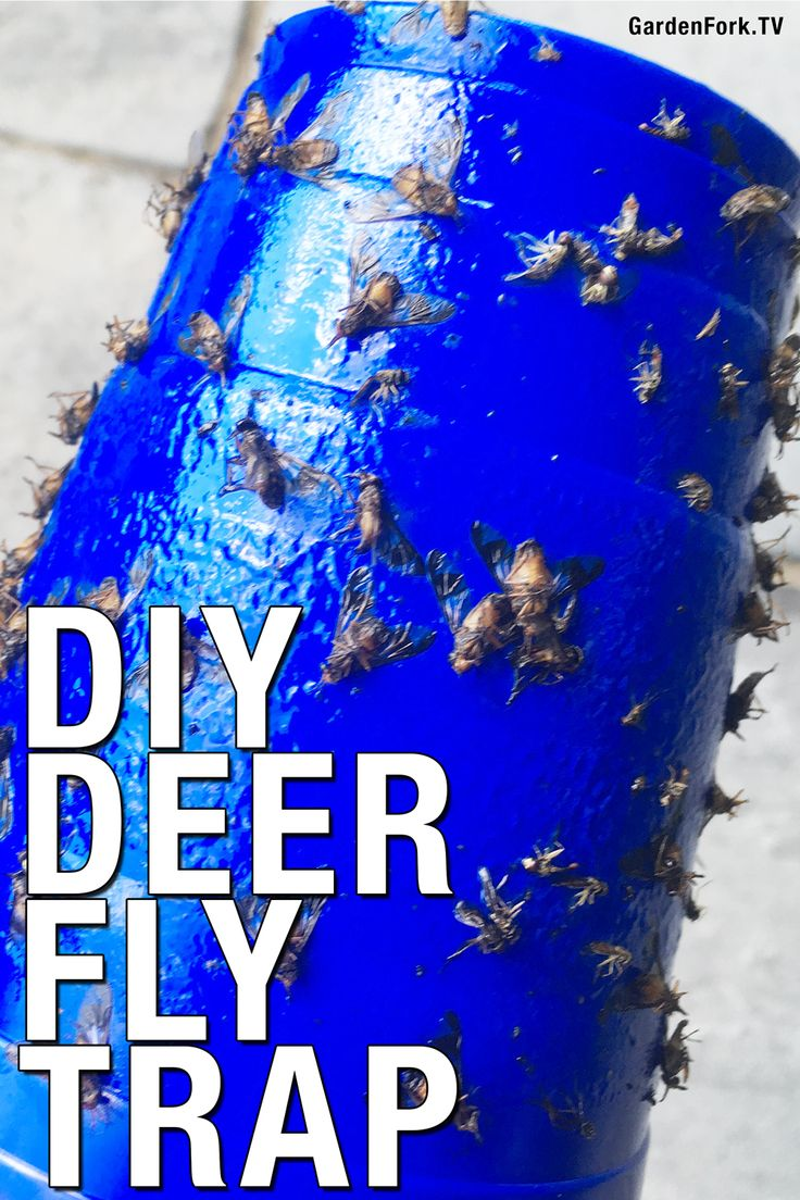 How to get rid of deer flies gf video with images