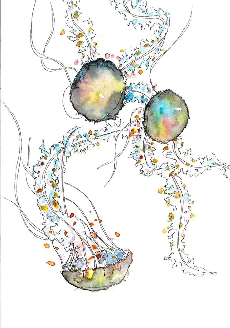 17 Best ideas about Jellyfish Drawing on Pinterest ...  17 Best ideas a...