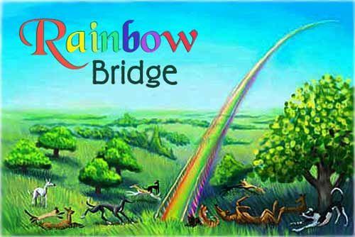 413 Best Images About Rainbow Bridge On Pinterest To