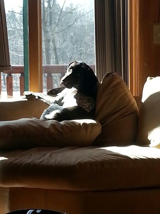 Good Morning Too In German : Images about german shorthaired pointers on