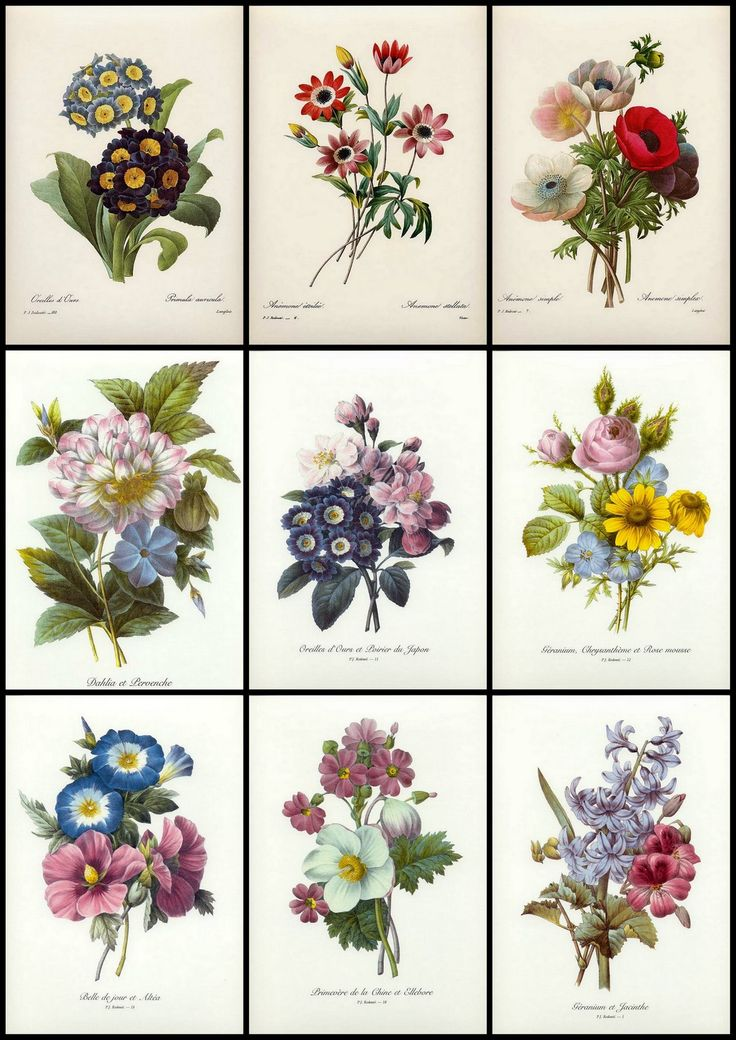 vintage flower prints - Google Search