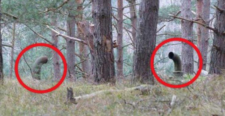 Dois garotos encontraram isso na floresta, e abaixo um segredo assustador!
