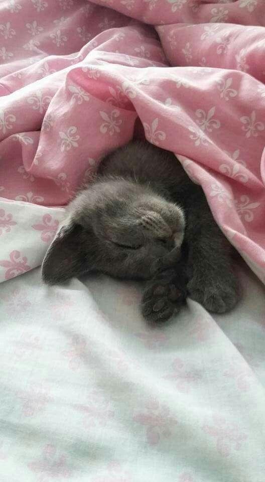 Just sleeping...