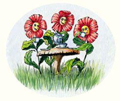 Plants Need Tea, Too!
