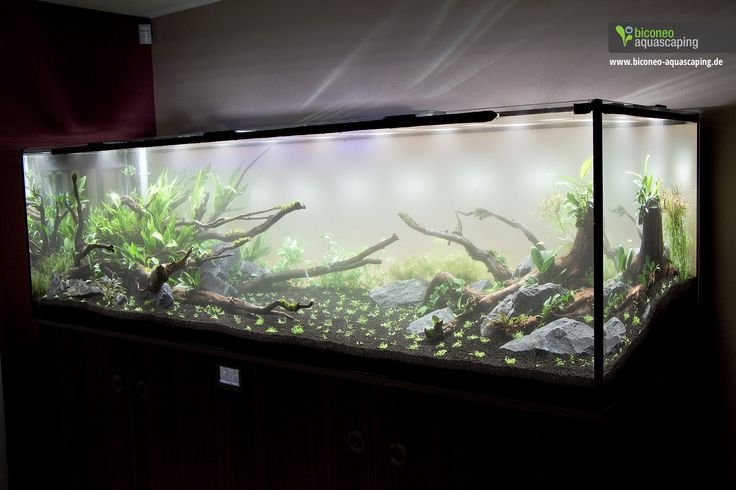 Biconeo Aquascaping : ... , 1200 Liter. Day one. #aquascaping #tank #plantedtank #ada #biconeo