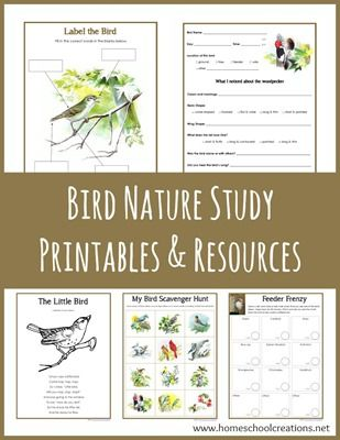 Bird nature study printables and resources from Homeschool Creations. Includes scavenger hunts, feeder tally, bird observation sheets, and writing prompts.