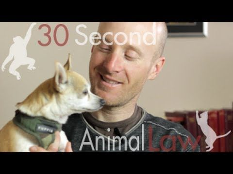 Levi Leipheimer on Fighting Puppy Mills | 30 Second Animal Law Video posted as a reason to Tell the USDA to shut down law-breaking puppy mills!