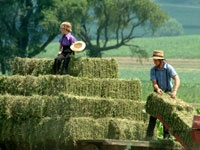 I helped my dad load many bales of hay in my day...