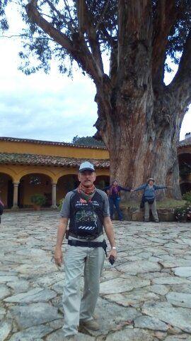 Nos dan sombra. alimento, refugio, hábitat, paisaje, biodiversidad, hospedaje de fauna, historia como este gigante que fue testigo del paso de Bolívar en Boyacá.