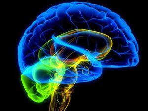 10 cosas que debes saber sobre tu cerebro: http://www.muyinteresante.es/10-cosas-que-deberias-saber-sobre-como-funciona-tu-cerebro #ciencia #science