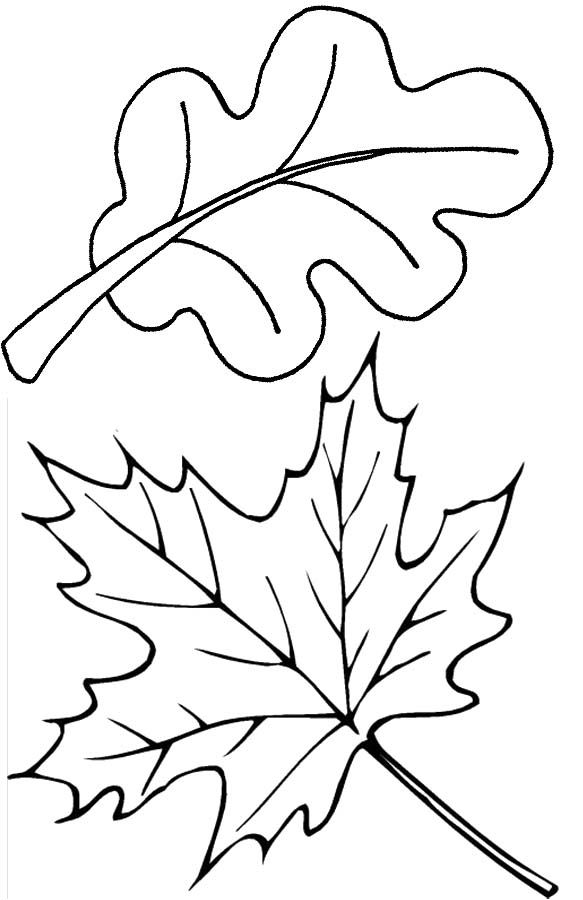 The Old And Dry Leaves Coloring Pages