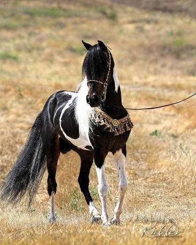 Beautiful black and white horse | Animal Friends ...