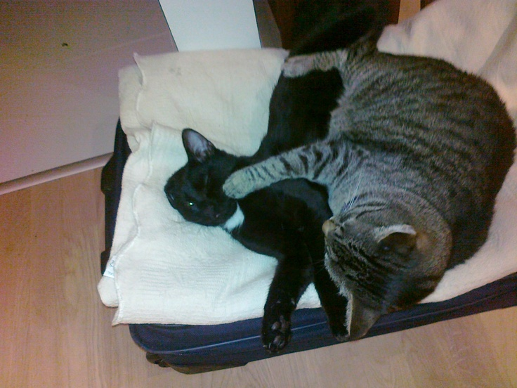 Two brothers sleeping tight