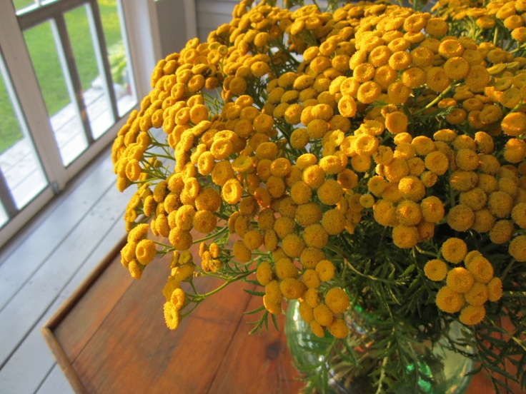 Weed bouquet with tansy...