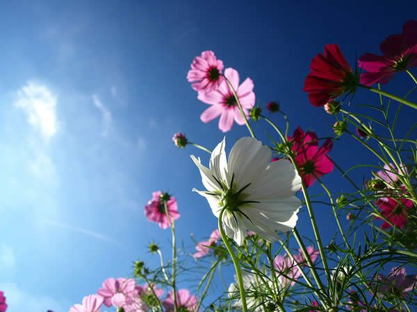 Low Angle Cosmos