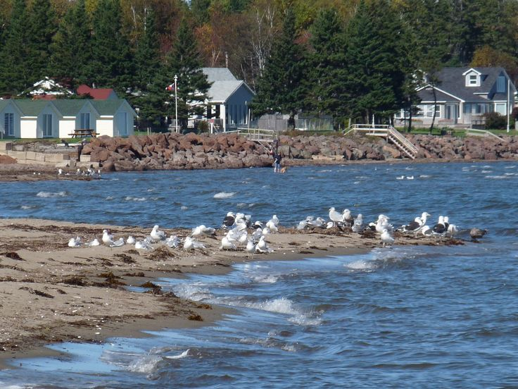 I have a beach and some me-time beckoning me! Photo: July '12 at Grande-Digue, NB. #nature #self