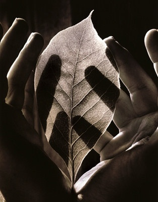 yama-bato:    Tessa Traeger, Sight-Leaf