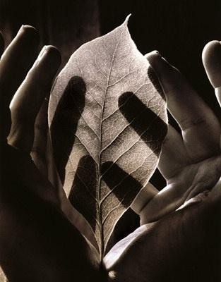yama-bato:    Tessa Traeger, Sight-Leaf
