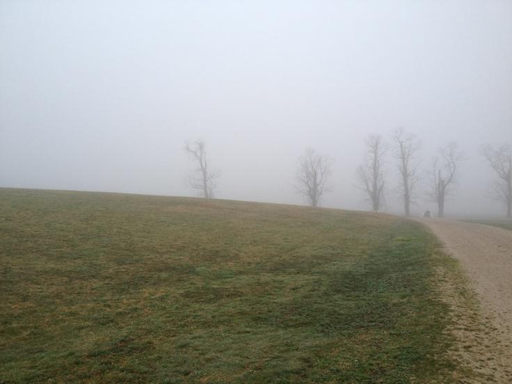 Fog at Caumsett