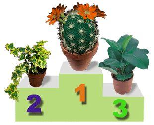 Рейтинг растений
