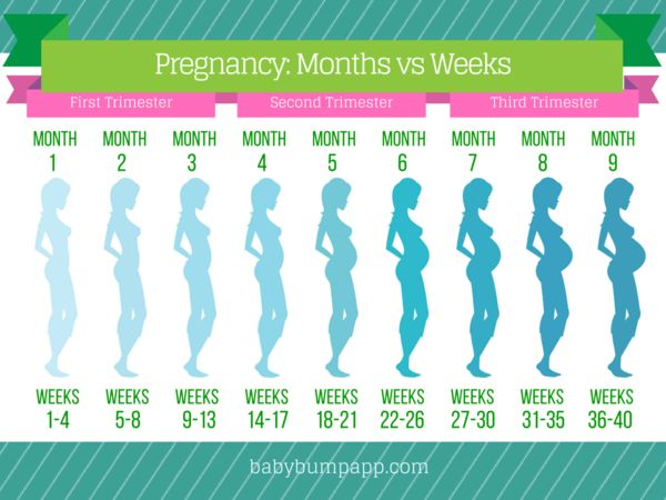 Pregnancy months Vs weeks.  I timeline of bumps
