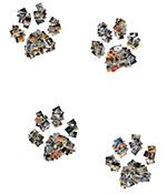 I KNOW I have enough photos of my dog to cover a wall. I used shape collage (program) to make the paws.