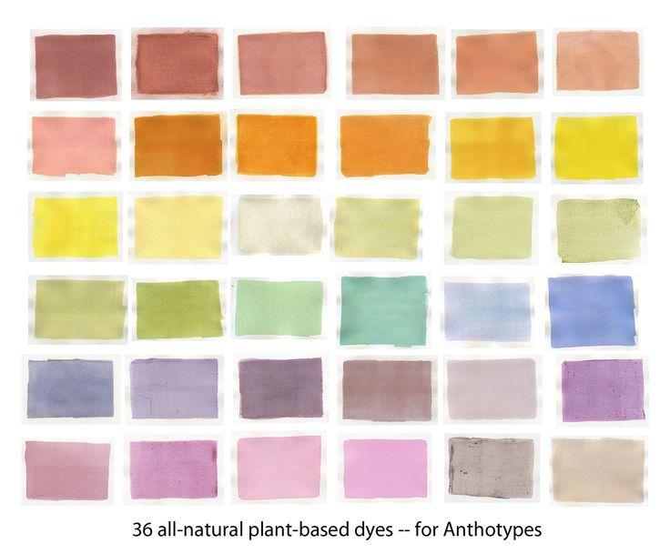 Anthotype Dye Tests