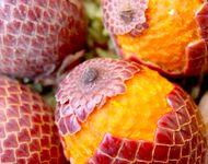 El Aguaje es un fruto nativo de la selva peruana, es uno de los alimentos más ricos en pro vitamina A, vitamica C y tradicionalmente conocido por que aumenta y mejora el desempeño de las hormonas femeninas.