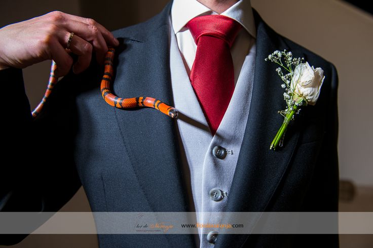 Boda de Paola y Javier. Fotografía del novio con una serpiente falsa coral
