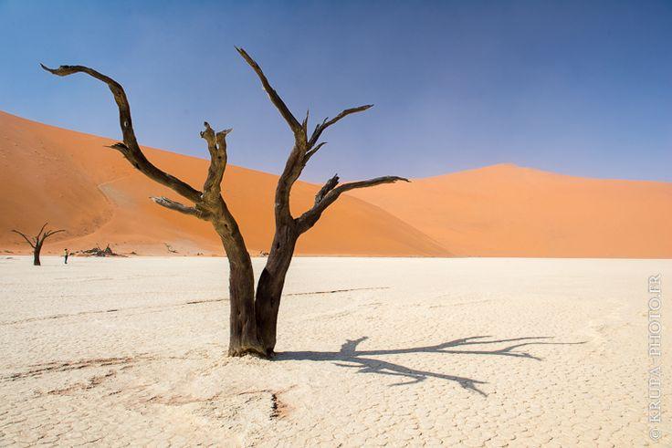 """Dead Vlei en Namibie (from <a href=""""http://www.krupa-photo.fr/piwigo/picture.php?/13366/category/506"""">Krupa photographies - Galeries</a>) #Acacia erioloba #acacias du désert #Africa #Africain #African #Afrique #Afrique australe #arbre pétrifié #Dead Vlei #DeadVlei #désert #désert de Namib #désert du Namib #Dune #Dune de sable #dunes de sable #lac mort #Namibia #Namibie #parc de Namib Naukluft #salar #Sesriem #Sossusvlei #Southern Africa"""