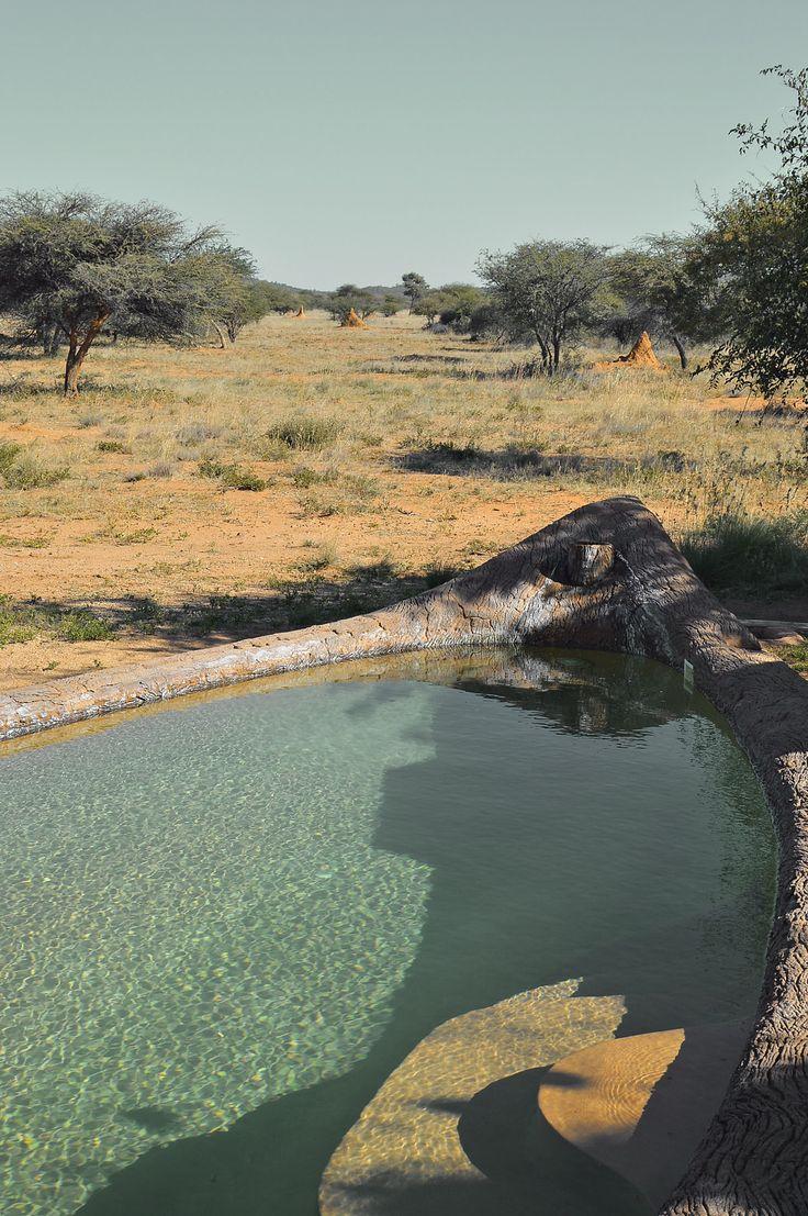 Okonjima Bush Suite swimming pool   heneedsfood.com