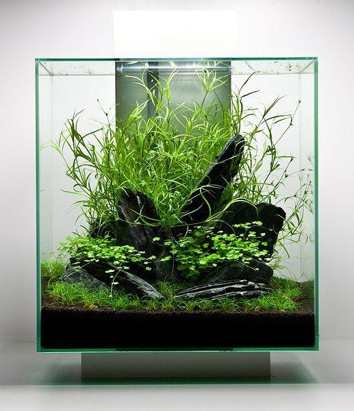 Aquascape, Ikan Hias, Http://www