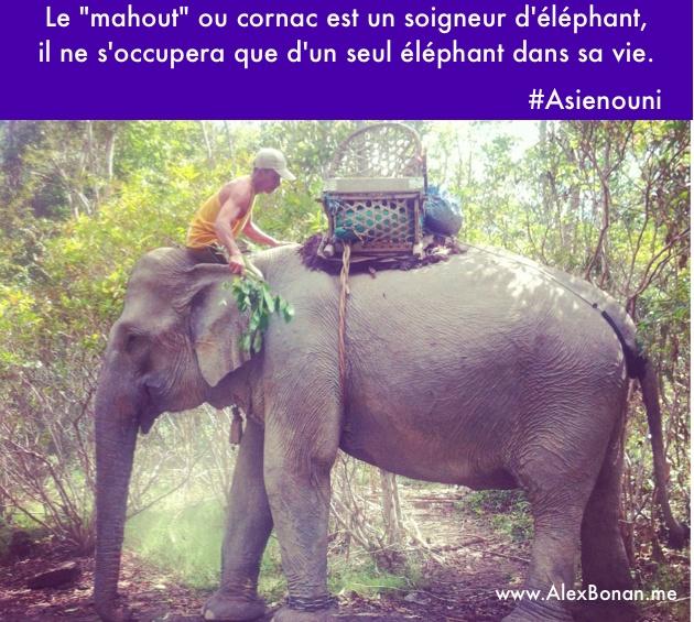 Xmas Cards 2013  #Asienouni #Laos #Champasak #Elephants #Mahout #Cornac #Alexbonan