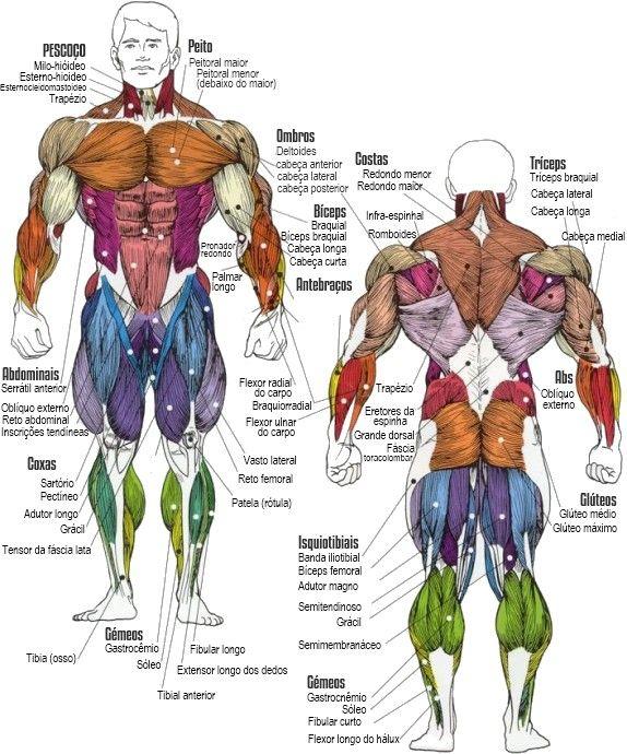 DIRETÓRIO DE EXERCÍCIOS Clique no grupo muscular desejado para visualizar os respetivos exercícios