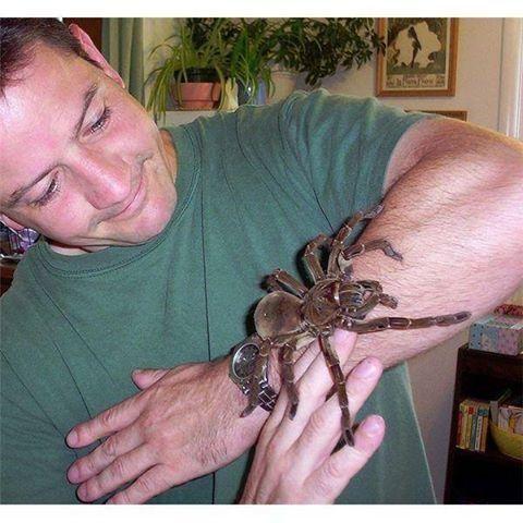 Los esparásidos son una familia de arañas araneomorfas. Se conocen como arañas cangrejo gigantes y, en Australia, como arañas de la madera. No es una tarántula