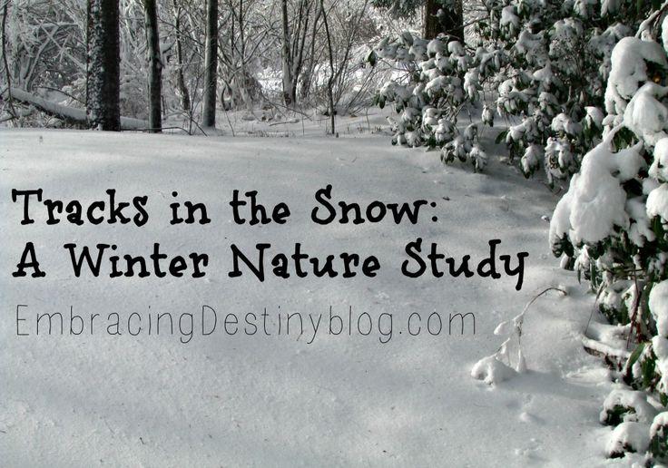Tracks in the Snow: A Winter Nature Study at embracingdestinyblog.com