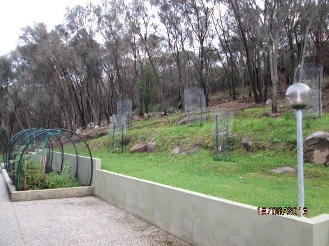 This is taken from the barbecue area, showing the vegetable garden and the bush around the property.