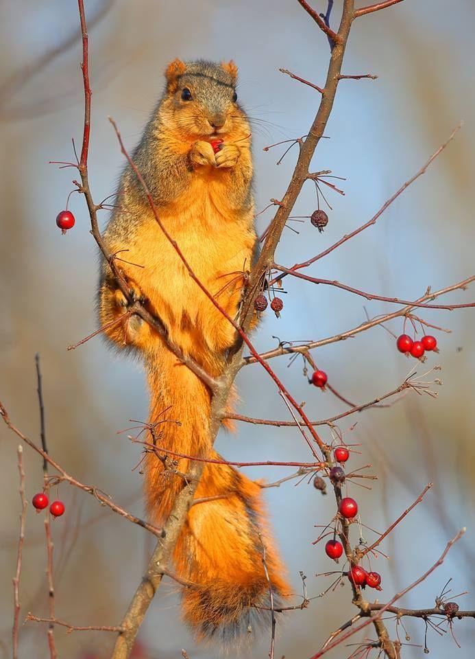 Gerlach Nature Photography Nature Photography Wildlife Animals