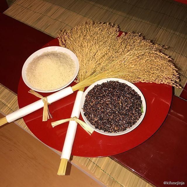 本日は新嘗祭(にいなめさい)という祭日です。宮中をはじめ、全国の神社で執りおこなわれる重要な祭儀です。新穀や新酒を神々に供し、神の恵みに感謝するお祭であります。本来は一般庶民も新しい穀物を神に供え、それを食し、収穫を祝う習慣がありました。  貴船神社では11:00より新嘗祭を執りおこないます。 本日の神事を通して、この意義深い祭日を実感いただきますよう、先着30名様まで一般の方も殿内参拝になれます。一般殿内参拝は初穂料無料です。ご希望の方には事前に整理券をお渡しいたしますので、なるべくお早めに社務所にお申し出ください。なお、神事の所要時間は約30分間です。 新嘗祭では、古代米(黒米)を御神前にお供えします。 殿内参拝いただいた方々には、古代米(黒米)を「直会(なおらい)の儀」にてお召し上がりいただきます。「直会」は神様と共に食す大事な儀式です。いわゆる「神人共食(しんじんきょうしょく)」、つまり御神前に供して御神氣が籠もった神饌(しんせん)を神様と共に食すことで、神様のお力をいただくというのが日本の祭の特徴であり、大切な要素であります。  #氣生根  #貴船  #貴船神社…