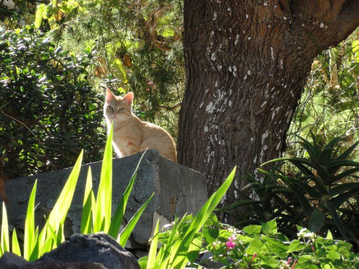 greek cat #maroulas village #rethymno #crete