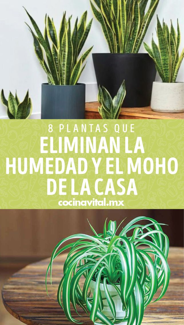 Aquí te diremos 8 plantas que eliminan la humedad y moho de la casa. Además puedes conocer 6 plantas para aromatizar tu hogar que son fáciles de cultivar. Container Gardening Vegetables, Vegetable Garden, Garden Of Eden, Landscape, Flowers, Arte Floral, Plants, Random, Style